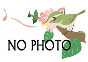 nophoto300